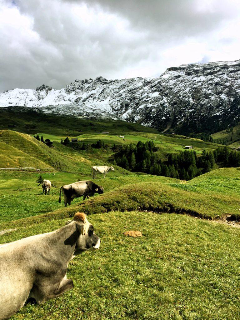Alpe di Suisu