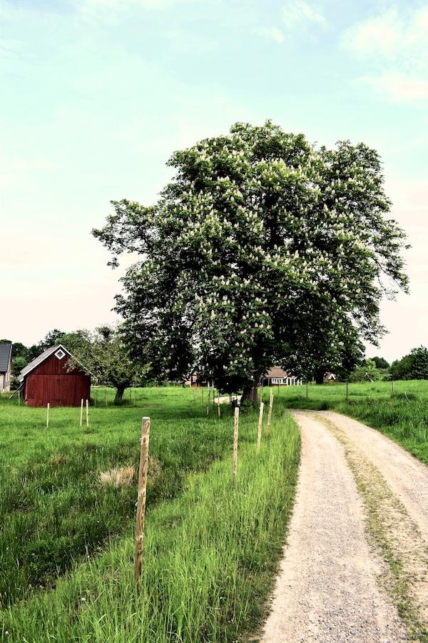 Skåneleden Ås-ås