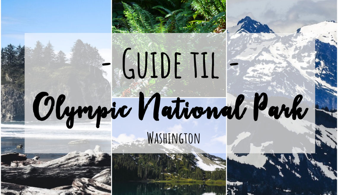 Guide til Olympic National Park
