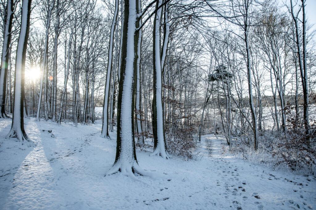 Vandretur i Bidstrup Skovene
